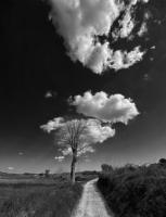 Arbre et nuage